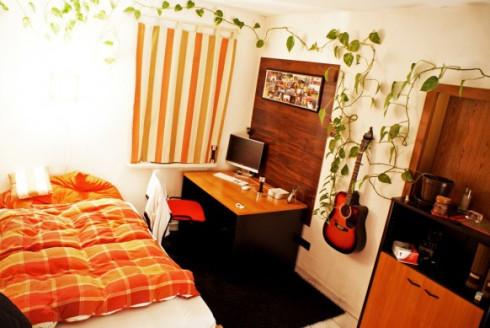 bedroom-money-plant-582x389