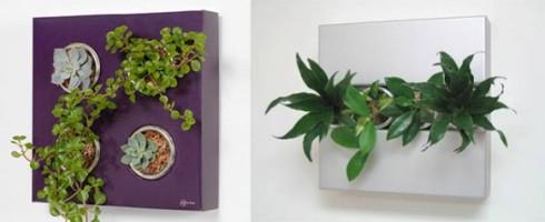 flower-box-plants-582x238