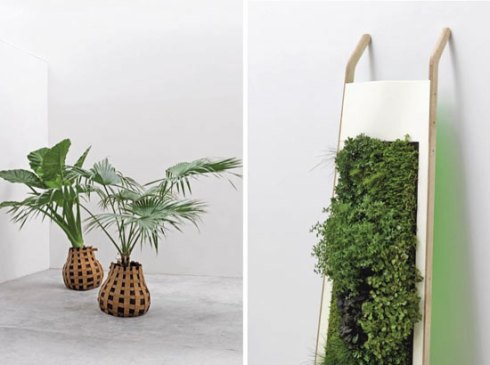 plants-displayed-in-a-modern-way